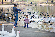 Dad and Son Watching Ducks and Goose at Whittier Narrows Park