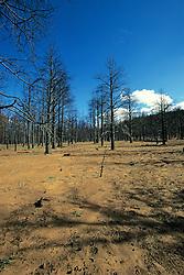 Forrest Recently Burned
