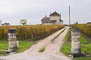 Vineyard.  Chateau Laroze. Saint Emilion, Bordeaux, France
