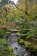 Early autumn foliage and moss covered rocks beside a stream leading to the Shiguretei Tea House in the Kenrokuen Garden, Kanazawa, Ishigawa, Japan