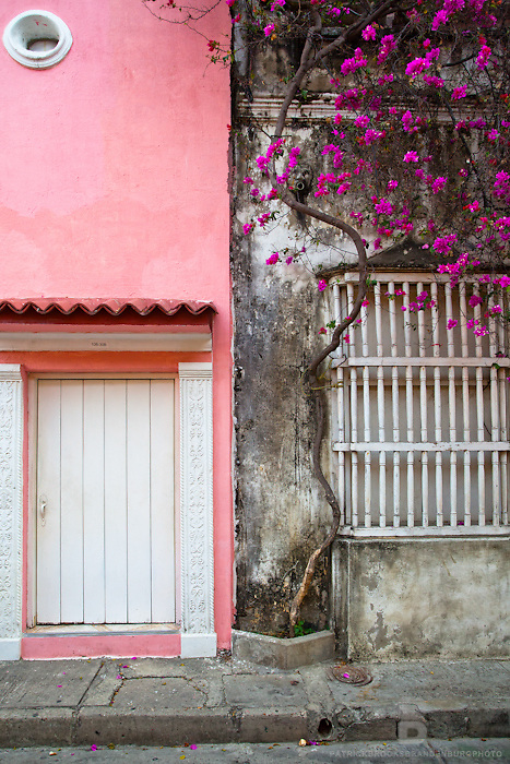A detail of an old street with one side filled with a pink building and white door and the other a tall vine with pink flowers.