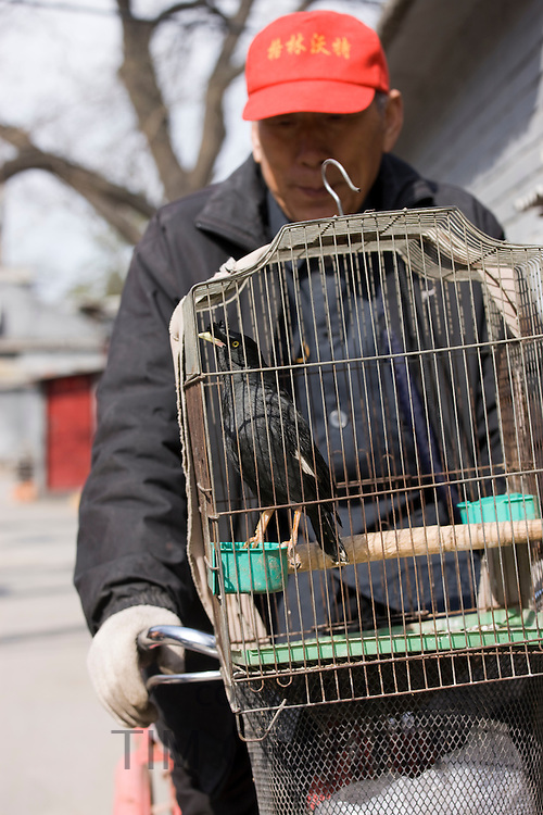 Elderly man cycles with a caged Mynah bird on the front of his bicycle in the Hutongs area, Beijing, China