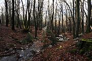 Belgische Ardennen vormen een bosrijk laaggebergte in oostelijk België (een groot deel van Wallonië). // Belgian Ardennes is a wooded low mountains in eastern Belgium (a large part of Wallonia).<br /> <br /> Op de foto / On the photo: Onderweg naar de Source Géronstère Bron <br />  Spa was tot ongeveer 1980 het belangrijkste toeristische centrum van de Ardennen. De geneeskrachtige werking van het ijzer- en koolzuurhoudend water was al in de 16e eeuw bekend. In 1764 werd de eerste badinrichting gebouwd en kreeg de stad bekendheid als kuuroord. /// Spa was until about 1980 the main tourist center of the Ardennes. The medicinal properties of the iron and carbonated water was already known in the 16th century. In 1764 the first bathhouse was built and was known as a spa town.