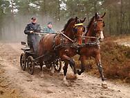 Mensport in Drents-Friese Wold bij Appelscha. Paarden voor rijtuig in draf