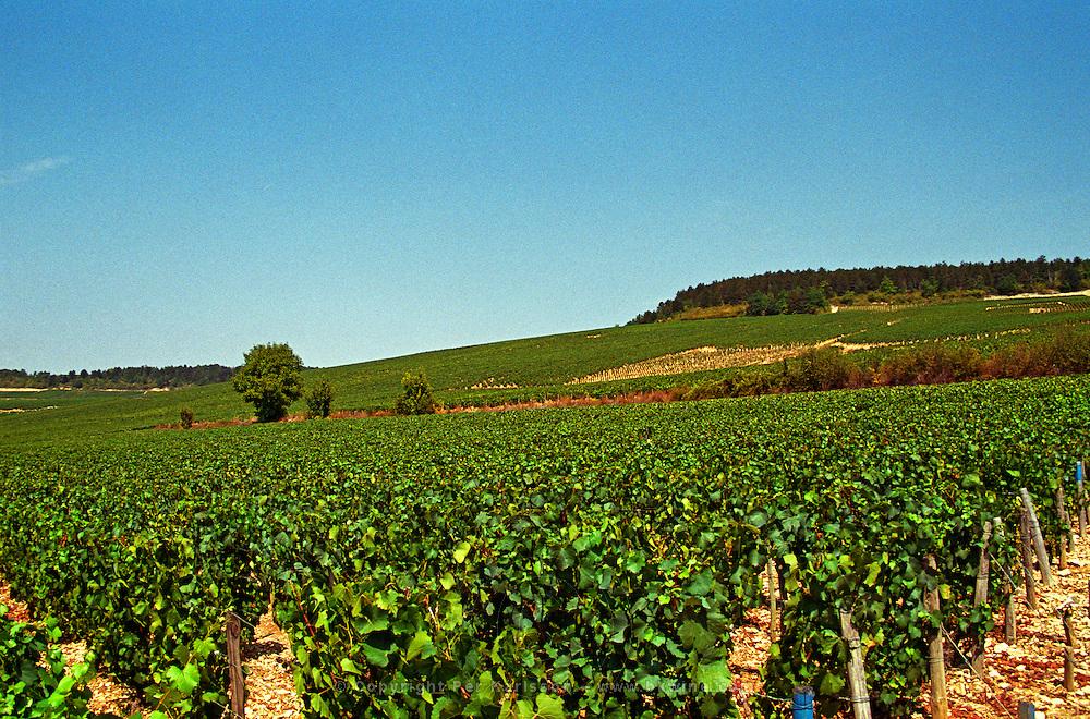 In Chablis: Les Clos and Valmur, Chablis Grands Crus vineyards, Bourgogne