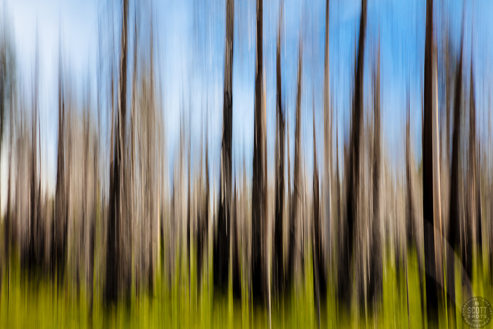 """""""Burnt Trees Abstract 3"""" - Abstract photograph of burnt trees at Big Meadows Campground above Hell Hole Reservoir, California. The camera was intentionally moved during a long exposure in order to achieve this look."""