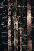 Tatrzanski las.