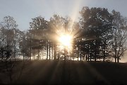 Fog and sunlight sets through the trees in the early morning hours in Albemarle County. Photo/ Andrew Shurtleff