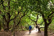 forest track at the nature reserve de Manteling near Domburg on the peninsula Walcheren, Zeeland, Netherlands.<br /> <br /> Waldweg im Naturschutzgebiet de Manteling bei Domburg auf Walcheren, Zeeland, Niederlande.
