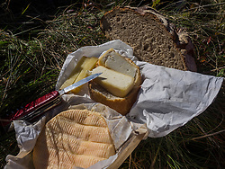French cheese with knife on grass, Munster, Vosges, France