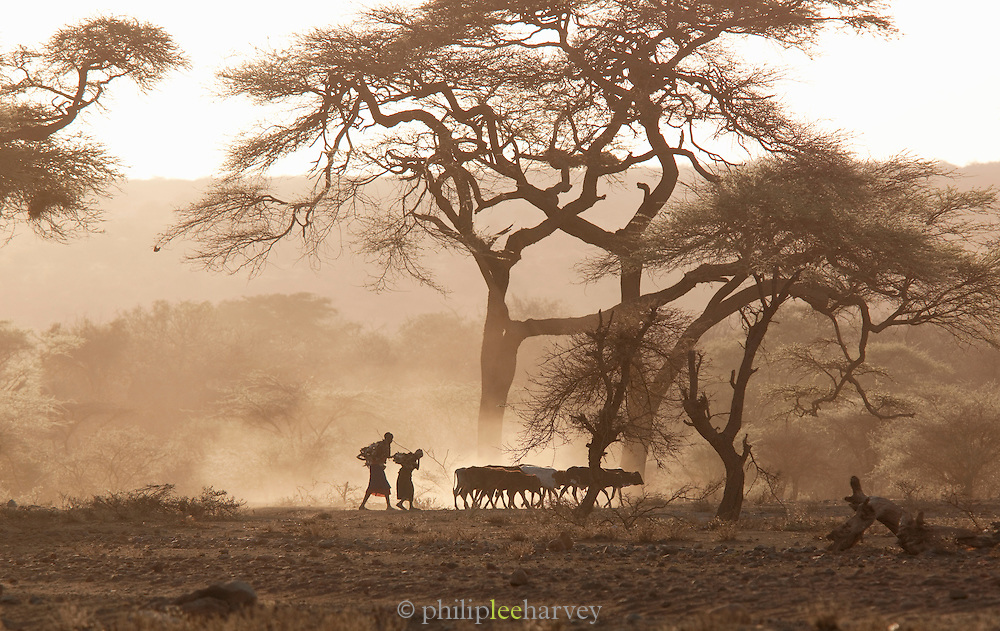 Maasai tribesmen herding their cattle, south-east Kenya, Kenya