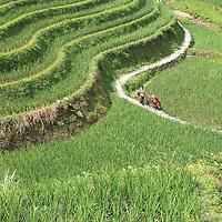 China | Longsheng | Dragon's Backbone Rice Terraces
