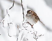 Winter Yard Birds