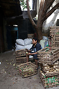 A boy peels vegetables, Bein al-Qasreen area, Islamic Cairo, Cairo, Egypt