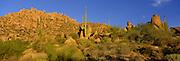 Saguaro cactus grow among granite boulders in the Sonoran Desert of southern Arizona