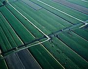 Nederland, Utrecht, Lopikerwaard, 17-10-2003; luchtfoto (25% toeslag); polder Lopikerkapel; melktijd: koeien lopen eigener beweging (en achter elkaar) richting boerderij; landbouw, veeteelt, melkvee, weiland, gras; sloten, verkaveling, waterhuishouding.<br /> Foto Siebe Swart