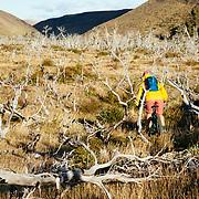 Riding through the lenga forests towards Refugio Las Torres to Sender Circuito.