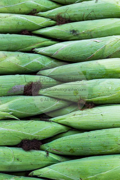 Fresh corn at Benito Juarez market in Oaxaca, Mexico.