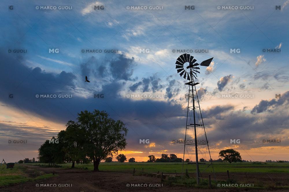MOLINO DE AGUA Y PAJARO EN VUELO TERO COMUN O CHORLO DE ESPOLON (Vanellus chilensis) AL ATARDECER, TRES SARGENTOS, PROVINCIA DE BUENOS AIRES, ARGENTINA (PHOTO BY MARCO GUOLI)
