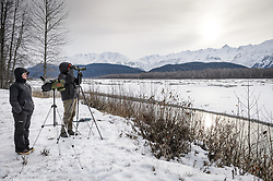 Steve Lewis, Raptor Management Coordinator, U.S. Fish & Wildlife Service (right), uses a spotting scope to check on leg snare traps attached to logs in the gravel bar of the Chilkat River. The traps are being used to capture bald eagles that will be used in a study being conducted by Rachel Wheat, a graduate student at the University of California Santa Cruz (left). Once leg snare and net launcher traps to catch bald eagles are set, it is a matter of waiting -- and waiting. On some days no eagles were caught, on others, only one or two were caught. Wheat is conducting a bald eagle migration study of eagles that visit the Chilkat River for her doctoral dissertation. She hopes to learn how closely eagles track salmon availability across time and space. The bald eagles are being tracked using solar-powered GPS satellite transmitters (also known as a PTT - platform transmitter terminal) that attach to the backs of the eagles using a lightweight harness. During late fall, bald eagles congregate along the Chilkat River to feed on salmon. This gathering of bald eagles in the Alaska Chilkat Bald Eagle Preserve is believed to be one of the largest gatherings of bald eagles in the world.