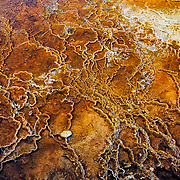 Colored bacteria grows in the geyser basin waters of Yellowstone National Park Wyoming.