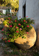 A large Greek terracotta urn filled with geraniums at The Orkos Estate, Paxos, Greece