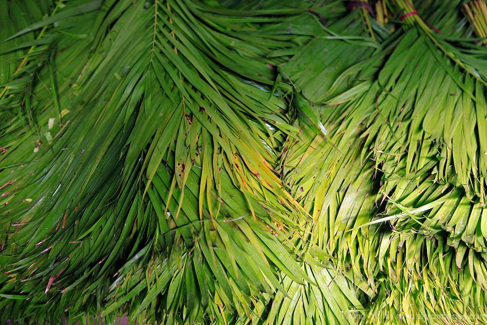 Asia, India, Calcutta.Palm fronds at the flower market in Calcutta.