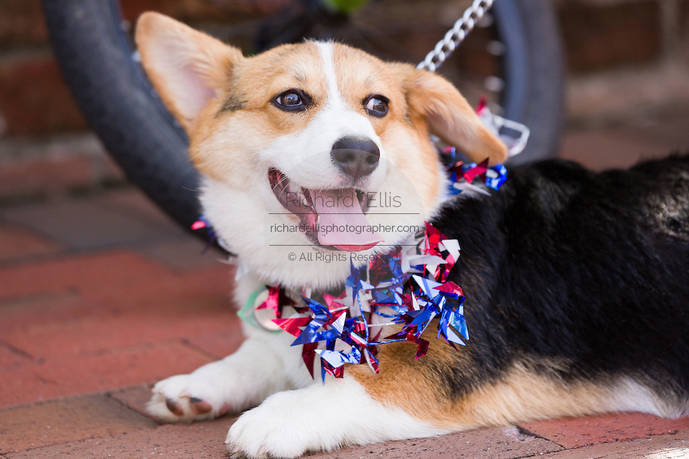 A dog decorated with patriotic bunting during the I'On neighborhood Independence Day parade July 4, 2015 in Mt Pleasant, South Carolina.