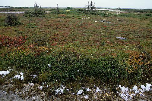Autumn colored tundra near Churchill, Manitoba. Canada.
