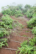 A steep hiking trail.