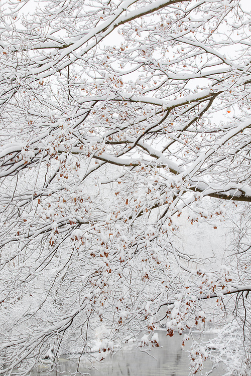 A fresh white snowstorm in the heart of a Midwestern winter. Typically these types of snowstorms don't last long and the snow it hangs on the trees is usually short-lived. It is basically go time when storms like this come. Be ready and capture the moments before the wind comes and blows the snow off the trees or the sun comes and melts it off.