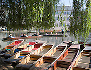 People punting in small boats on the River Cam, Cambridge England
