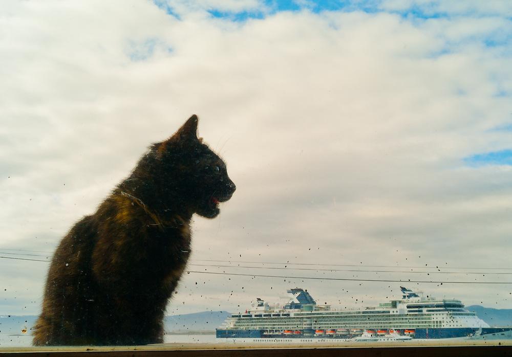 Cat and cruise ship, Ushuaia, Tierra del Fuego, Argentina.