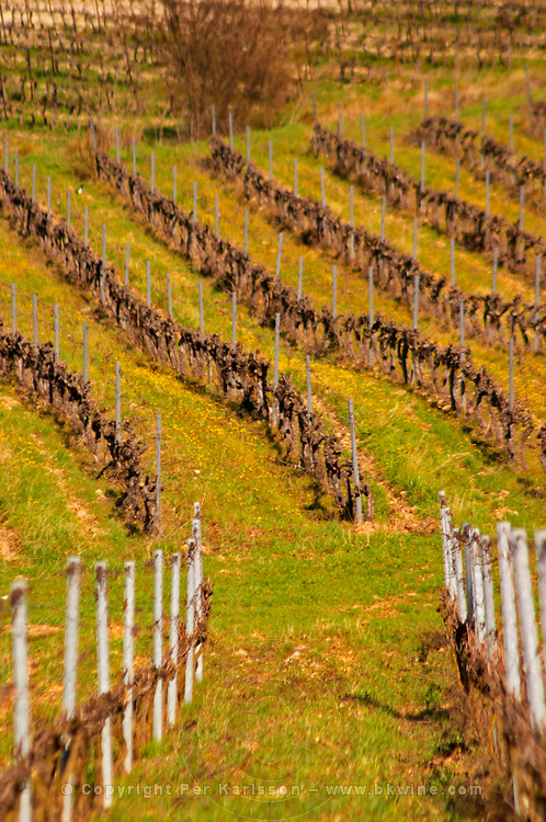 Graphic pattern vineyard Château Barbanau and Clos Val-Bruyere Cassis Cote d'Azur Var France