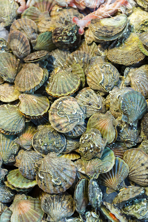 Fresh seafood, clams in shells, on sale in food market in Kadikoy district on Asian side of Istanbul, East Turkey