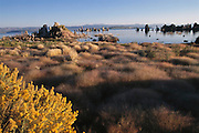 Tufa towers in Mono Lake. Mono Lake lies near the town of Lee Vining. It is at least 700,000 years old and one of the oldest continuously existing lakes on the continent. Tufa towers (photographed) are made from calcium and carbonate combine to form limestone, which builds up over time around the lake bottom spring openings. Declining lake levels have exposed the tufa towers we see today. Some of the tufa towers are up to 30 feet high. Route 395: Eastern Sierra Nevada Mountains of California.