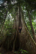 Kapok tree & Man<br /> (Ceiba pentandra)<br /> Rewa River<br /> Rainforest<br /> GUYANA. South America