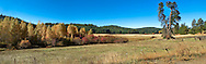 Aspen and Red Osier Dogwood grow along a seasonal streambed in a rural pasture in Klickitat County, WA, USA. Panorama