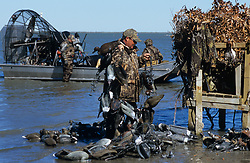 Stock photo of a man in camo walking back onto shore with his ducks and decoys