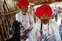 Inde, Rajasthan, village de Meda dans les environs de Jodhpur, population Rabari, berger, tonte des chevres // India, Rajasthan, Meda village around Jodhpur, Rabari ethnic group