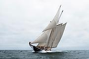 Schooner Columbia sailing in the Opera House Cup regatta.