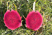 Pitaya (AKA dragon fruit)
