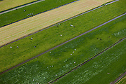 Nederland, Zuid-Holland, Groene Hart, 12-05-2009; Polder Zevenhoven met grazende Holsteiner koeien in het weiland.Swart collectie, luchtfoto (toeslag); Swart Collection, aerial photo (additional fee required).foto Siebe Swart / photo Siebe Swart