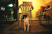 DOG BAR NIGHTIME, Amazon, near Boavista, northern Brazil, South America. A dog outside a bar in the middle of what used to be primary rainforest, and is now a township. Ecological biosphere and fragile ecosystem where flora and fauna, and native lifestyles are threatened by progress and development. The rainforest is home to many plants and animals who are endangered or facing extinction. This region is home to indigenous primitive and tribal peoples including the Yanomami and Macuxi.