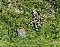 Aerial view of herd of sheep with a shepherd at beautiful Karditsa region in Greece