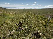 Saitoti eating wild berries. Near the Hadza camp of Dedauko.