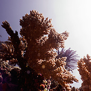 Corals on the Great Barrier reef.