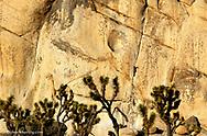 Rock climbing at Joshua Tree National Park in California
