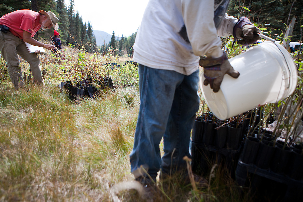 Trees waiting to be planted in the Valles Caldera are watered and counted. Santa Clara Pueblo has received $6,513,000 in stimulus funds to promote healthy forests and reduce hazardous fuels..