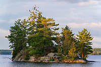 https://Duncan.co/cormorants-atop-tree-on-small-island